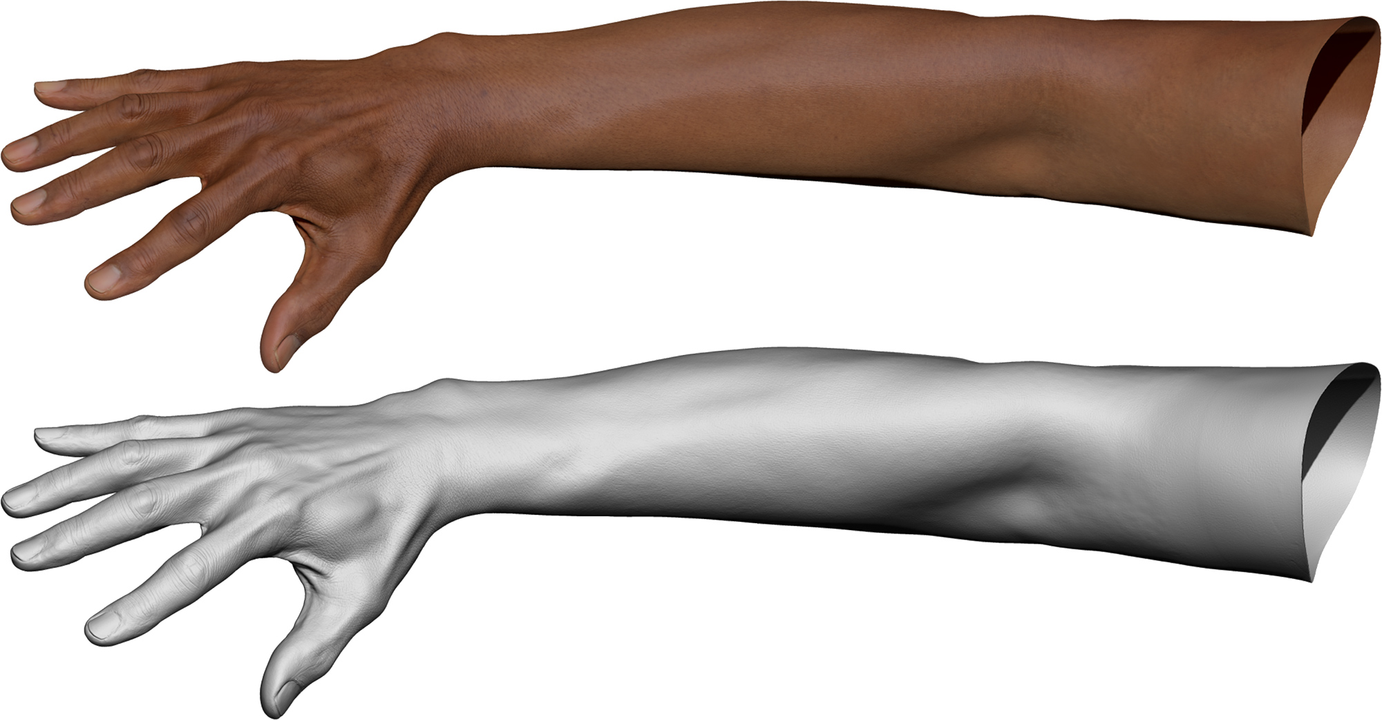 3D Hand and Arm Model with realistic texture maps