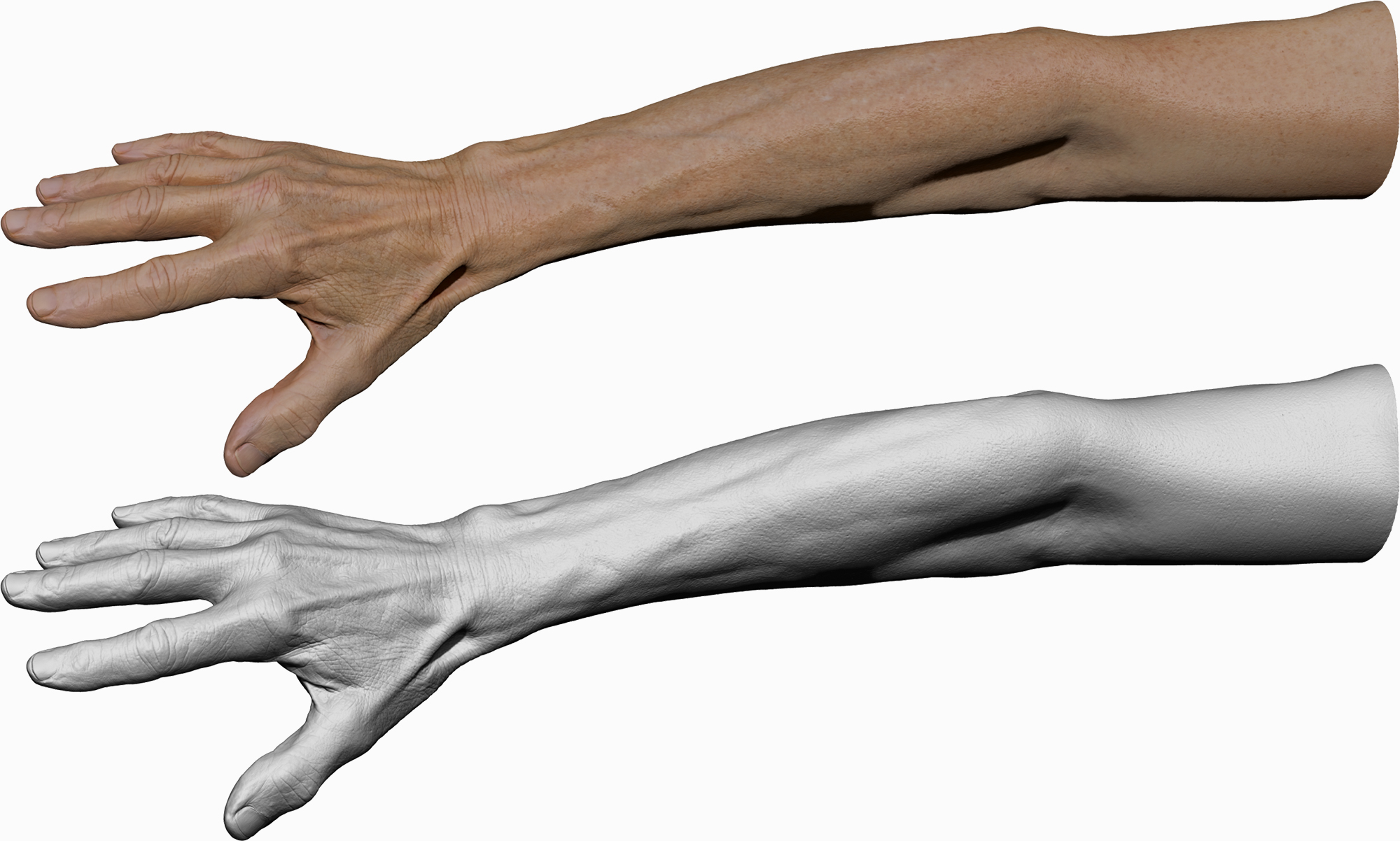 Male textured 3D hand model