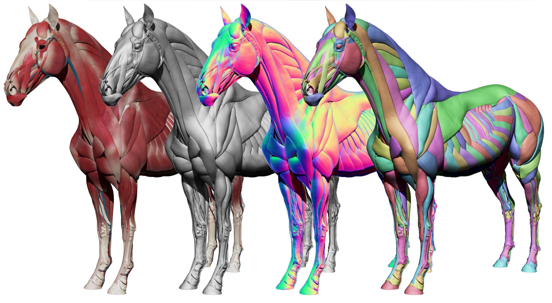 3D Horse Model Zbrush