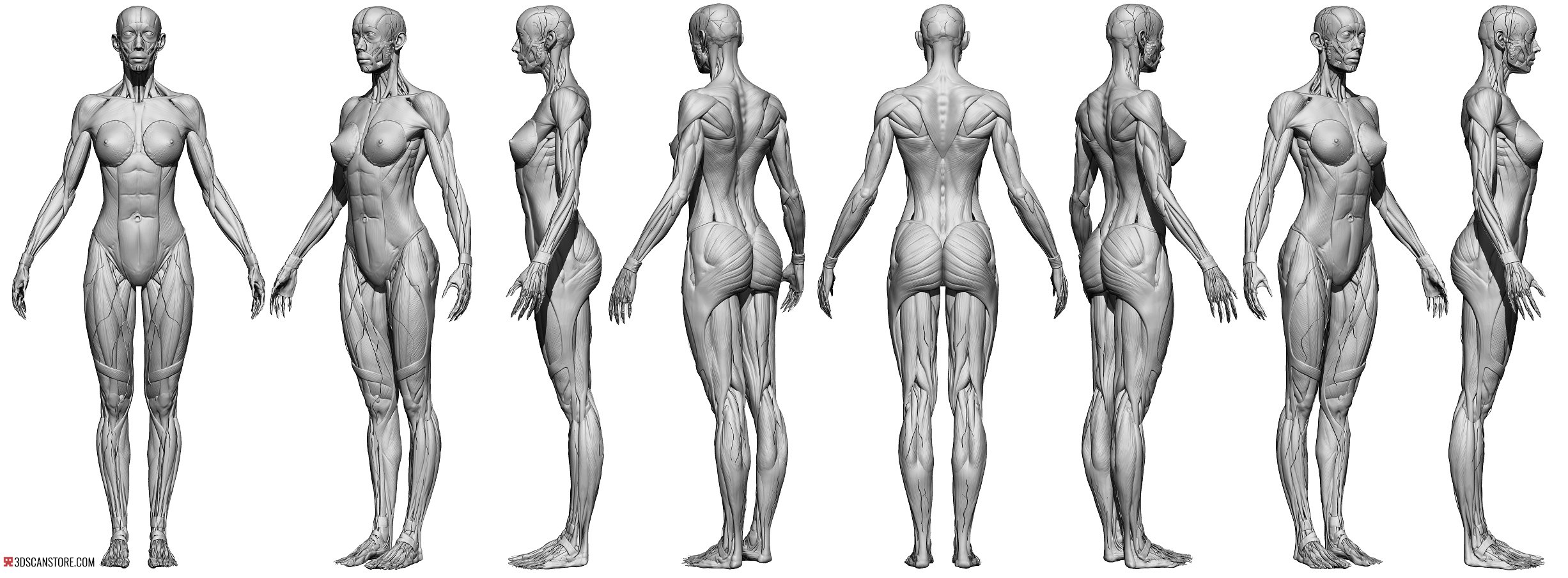 Female Écorché Reference Images