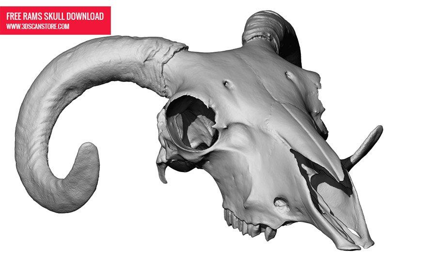 Free 3D Ram Skull Download