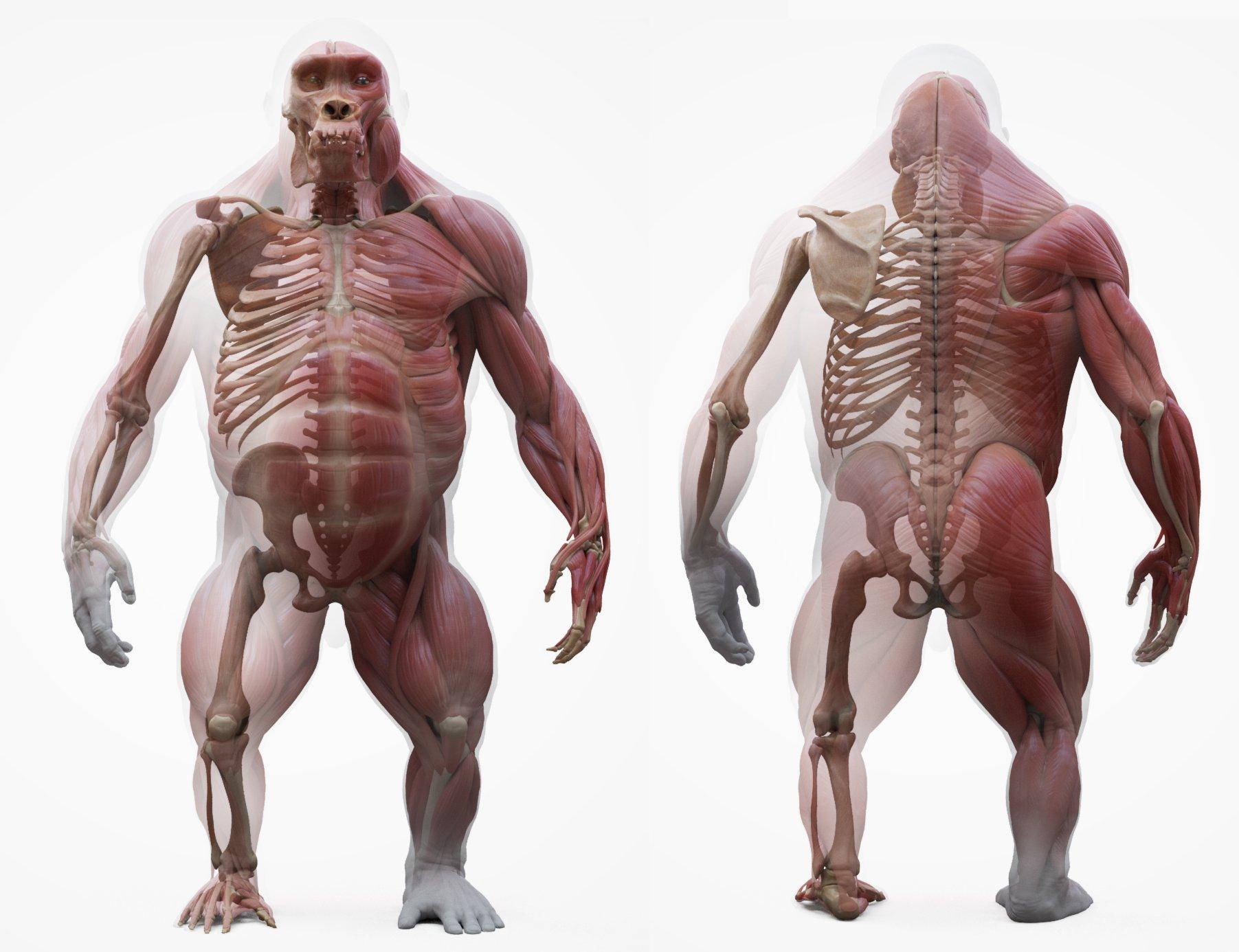 Gorilla 3D Model Download