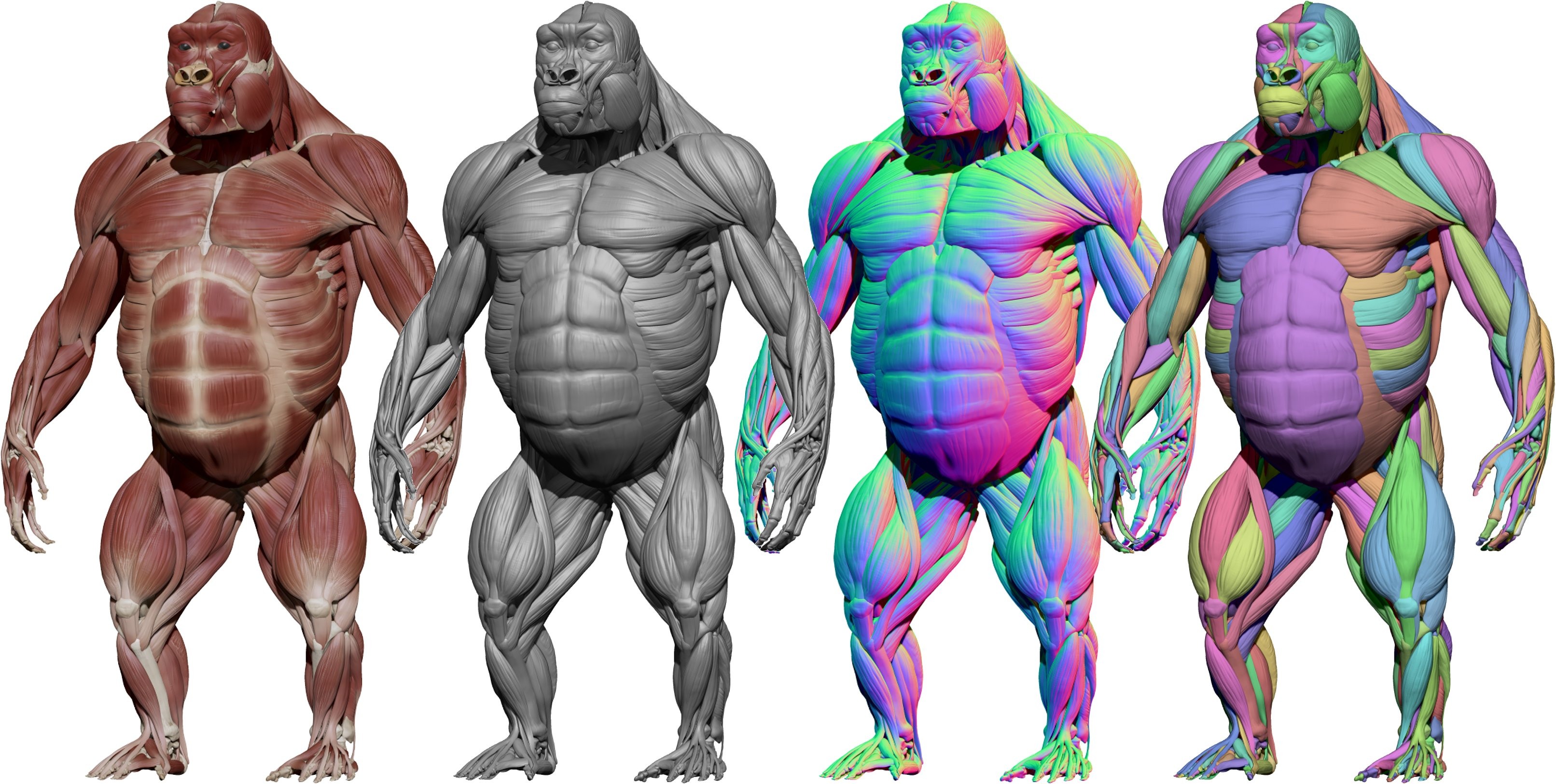 Download Zbrush Gorilla model